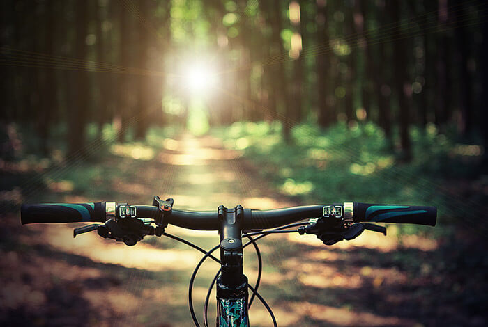 Mountain bike in a forest