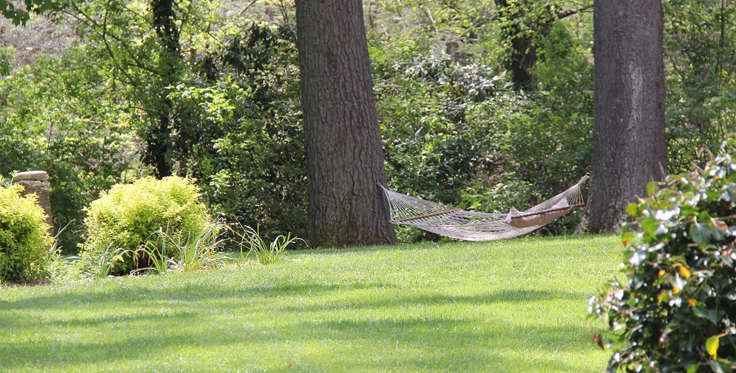Hammock in our Garden