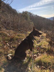 Dog on hike near our North Carolina B&B