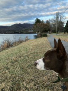 Harry takes in the mountain views while social distancing at lake Junaluska
