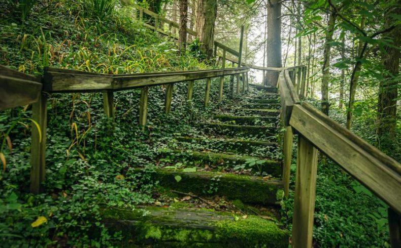 Trail through the forest near our North Carolina inn